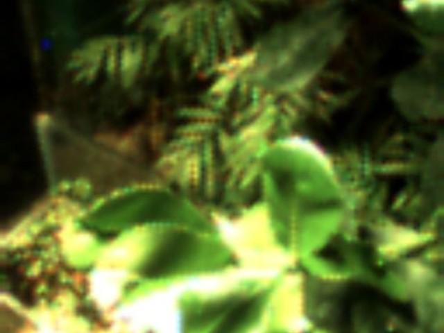 Questo è il primo selfie scattato da una pianta
