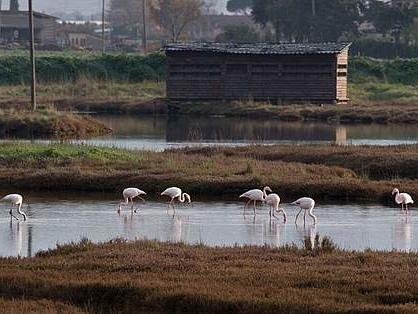 Piombino, l'oasi Wwf Orti Bottagone si fa più grande: annessa l'area Perelli Bassi