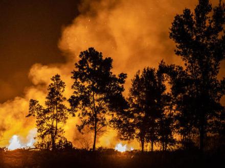 Olio di palma: la foresta brucia in Indonesia. Greenpeace denuncia gli impegni disattesi delle multinazionali e lancia una petizione