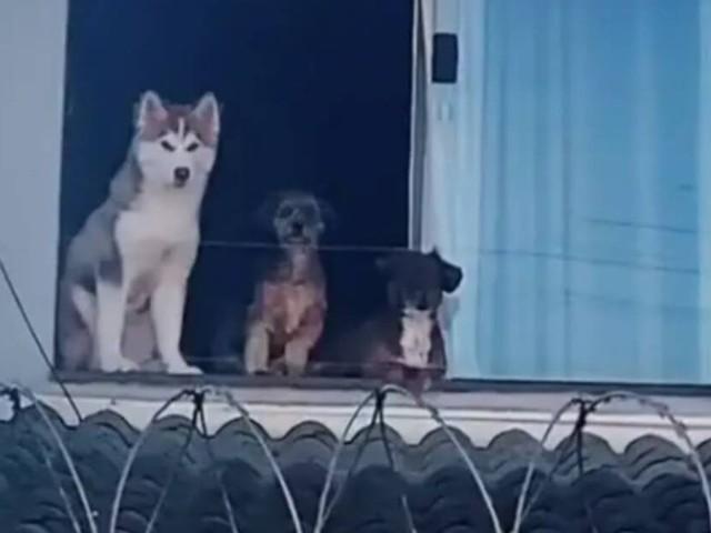 I suoi cani si affacciavano tutti i giorni alla finestra che dava sul tetto con il rischio di precipitare nel vuoto