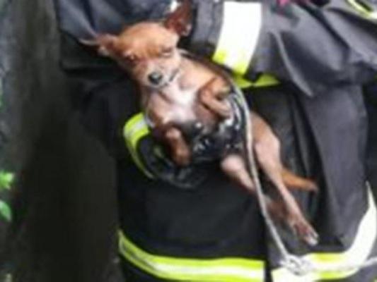 Cane rimane intrappolato in un canale a Pavia. Salvato dai Vigili del Fuoco