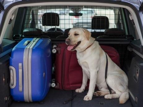 Estate in vacanza in auto con il cane: i consigli di Seat | video