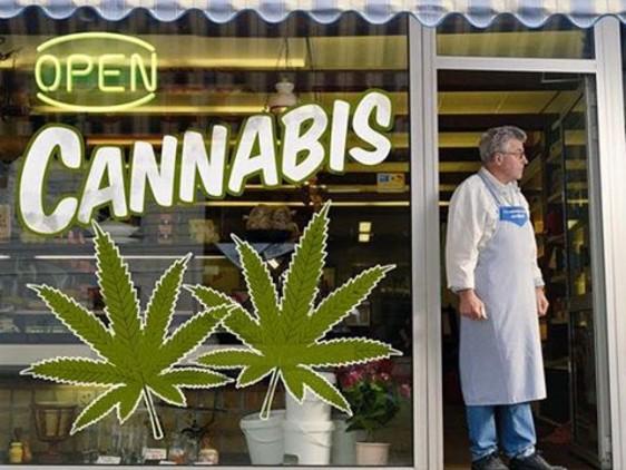 Finanziaria, Italia Viva: disciplinando la vendita della cannabis più di 5 miliardi di euro per lo Stato