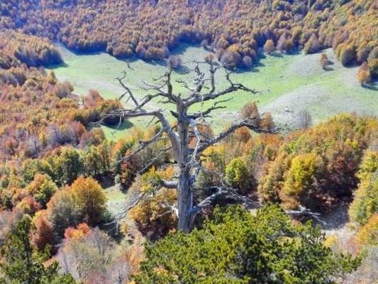 Al Bocs Art Museum una nuova opera, è l'albero più antico d'Europa