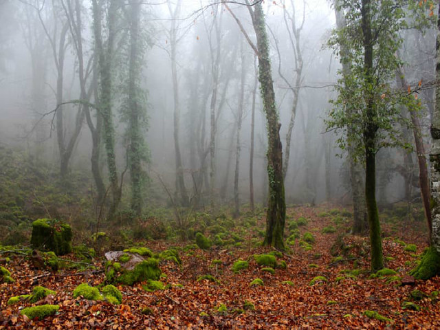 """Bosco del Sasseto: """"Il bosco di Biancaneve"""", apre a famiglie e bambini con IL BOSCO INCANTATO"""