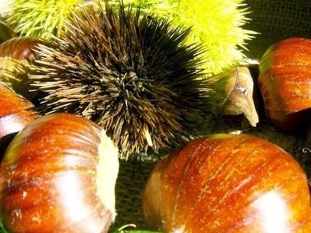 Tornano le castagne Made in Italy (+25%) grazie ad una guerra biologica