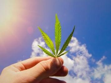 Cannabis light, vendita è reato: lo stop della Cassazione