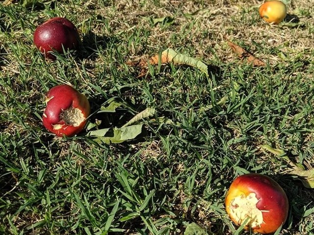 Maltempo, partita la ricognizione dei danni: agricoltura in ginocchio