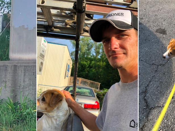 Cane legato col cavo elettrico: salvato da un uomo