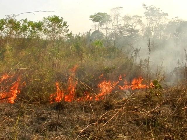 """Il problema scottante dei Maya: passare dal """"taglia e brucia"""" a un'agricoltura sostenibile"""