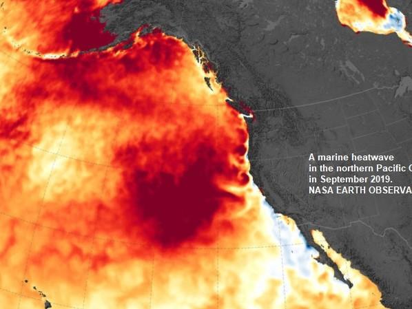 Le ondate di caldo marine sono dovute all'attività umana e sono 20 volte più frequenti