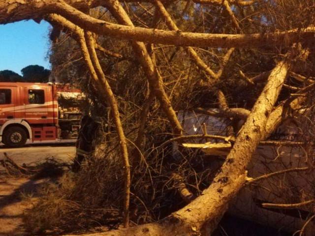 Jesi: Cede un pino all'ex Cepi, controlli al giardino
