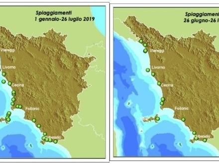 Da inizio anno sono 28 i cetacei spiaggiati in Toscana, 11 nell'ultimo mese