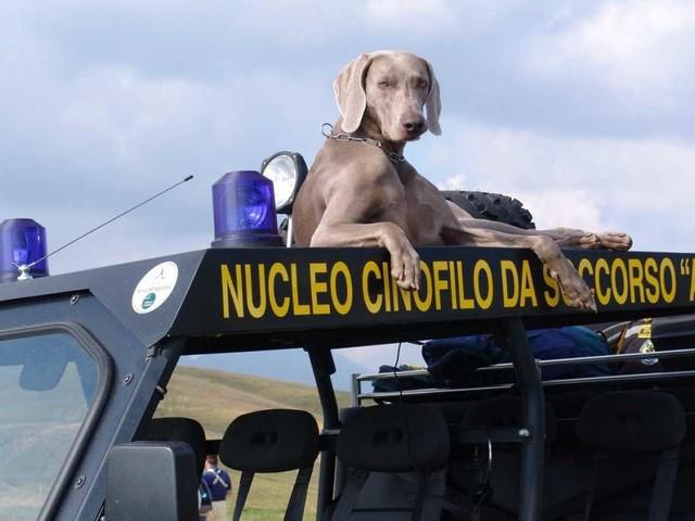Addio a Greta, il cane eroe che scavò tra le macerie di Amatrice