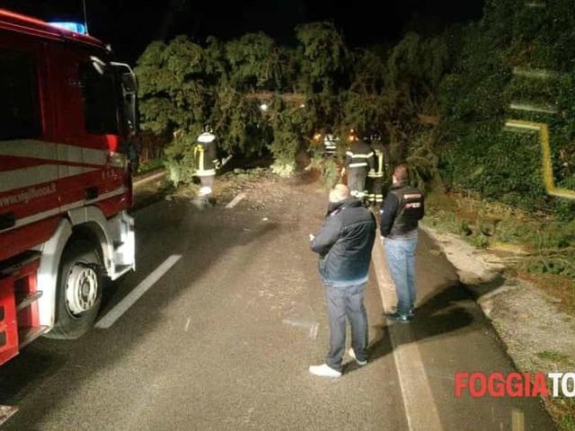 Paura all'altezza di Amendola: albero di grosse dimensioni cade sulla strada per Foggia