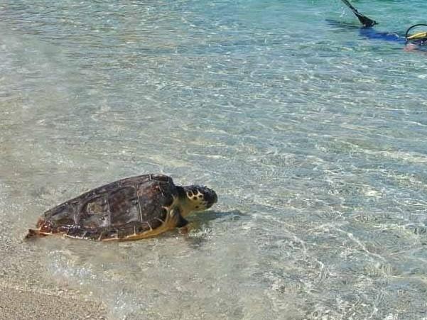 Tartaday, la giornata per conoscere da vicino le tartarughe marine