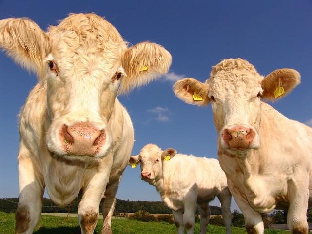 Carne infetta dalla Polonia: l'Ue manda gli ispettori