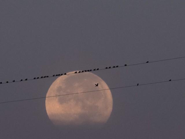 Superluna oggi (7-8 aprile 2020): orario, come vederla