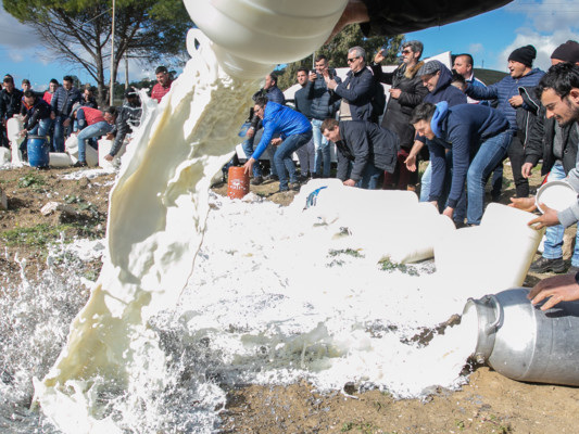 Cosa prevede la bozza di accordo sul prezzo del latte di pecora