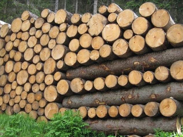 La Toscana all'Ue: «Valorizzare la risorsa legno per favorire le economie sostenibili»