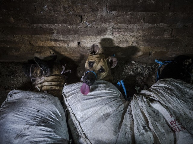 La Cina potrebbe presto vietare consumo della carne di cane e gatto (anche a causa del coronavirus)