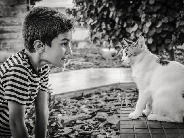 Ogni giorno, 30 minuti: a Berlino i bambini leggono storie a gatti che hanno subito traumi