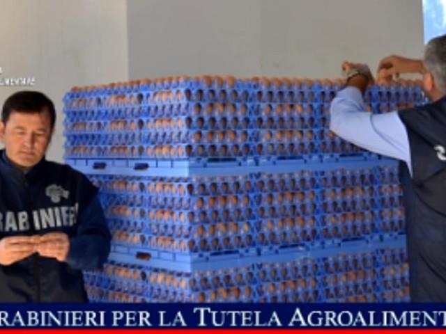 Blitz dei carabinieri: sequestrate 26 mila uova prive di tracciatura