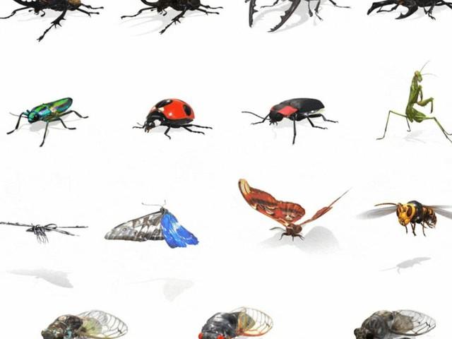 Google aggiunge una buona dose di insetti ai risultati di ricerca in Realtà Aumentata (foto)