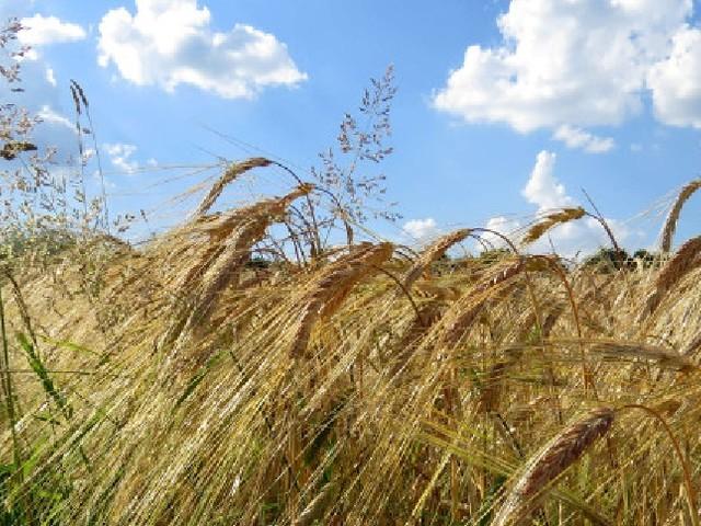 Agricoltura: salgono a 100 milioni le risorse a favore del biologico toscano