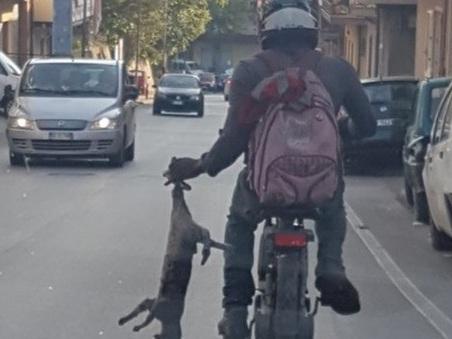 Migrante trascina un gatto in motocicletta, scena horror a Reggio Calabria