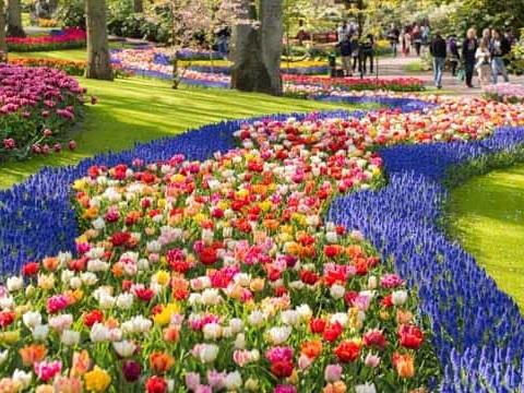 La fioritura dei tulipani al parco Keukenhof