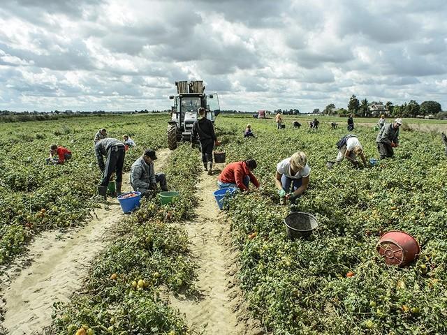 Perché oggi è giusto e razionale regolarizzare gli immigrati irregolari, non solo in agricoltura