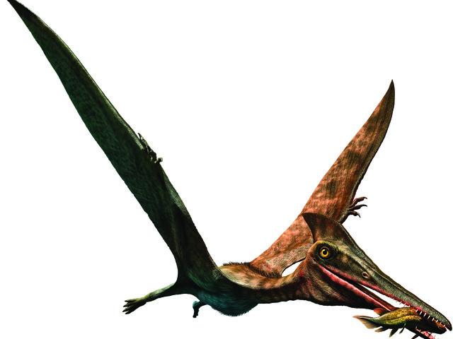 """""""Piume e denti giganti: l'impero dei dinosauri"""""""