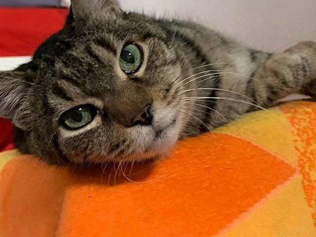 Oggi è la festa del gatto: Biagio e gli altri mici aspettano una famiglia al Parco gattile di Milano