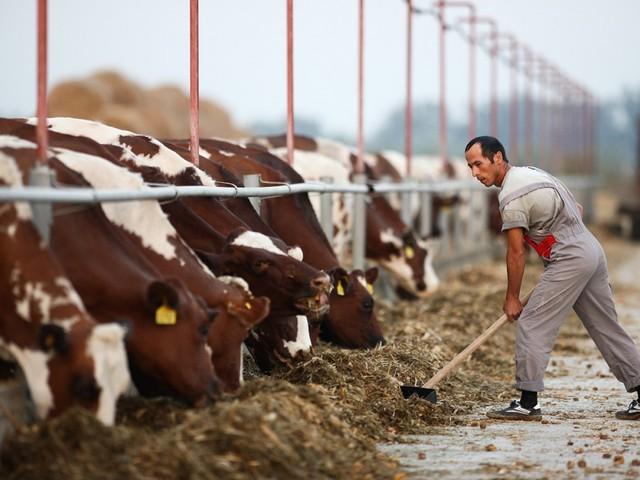 Vuoi aprire un'azienda agroalimentare in Russia? Scopri come