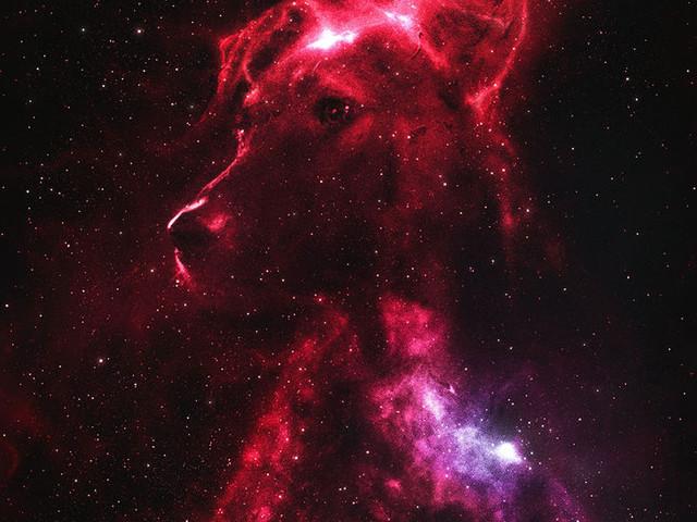 I cani lanciati nello spazio. Storie di eroismo e crudeltà