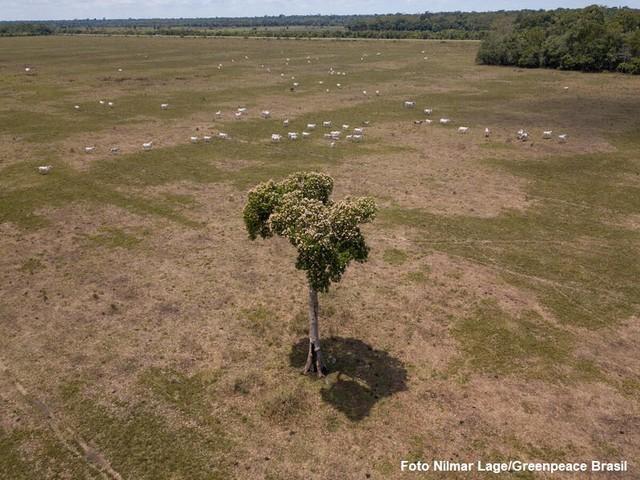 In Brasile la deforestazione avanza ancora. I diritti dei popoli indigeni retrocedono
