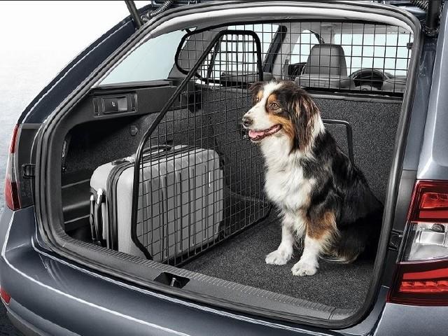 I 20 consigli per viaggiare con animali a bordo
