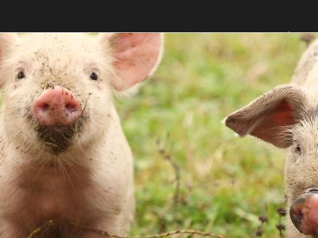 Benessere animale: «La proposta di Speranza e Bellanova è ingannevole per i consumatori»