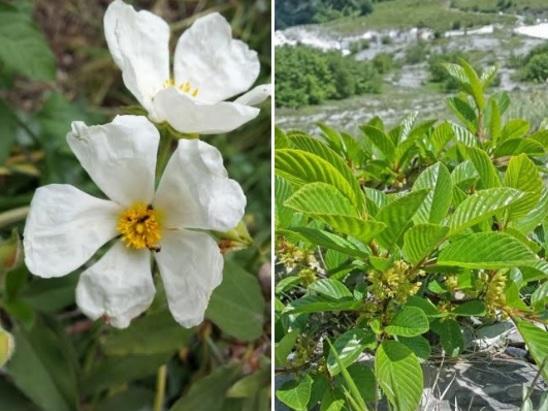 Realizzato il censimento della flora legnosa nativa ed esotica di tutta la Toscana