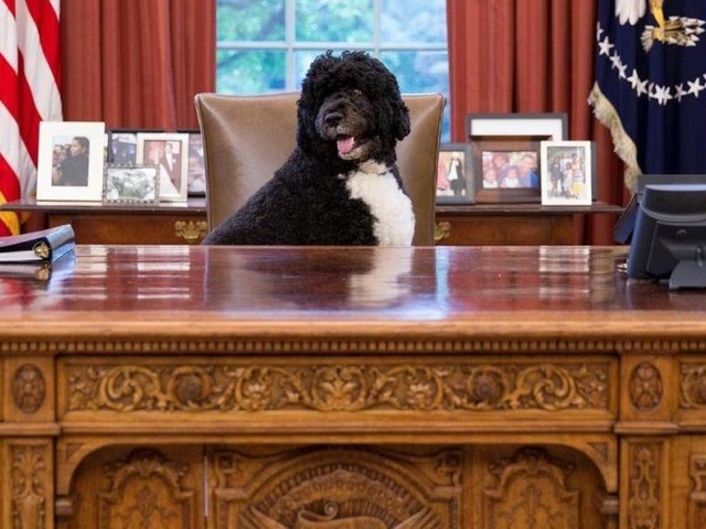 Obama Family Announces Death Of Family Dog Bo