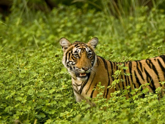 Destinazione Rajasthan: spiritualità, natura e avventura
