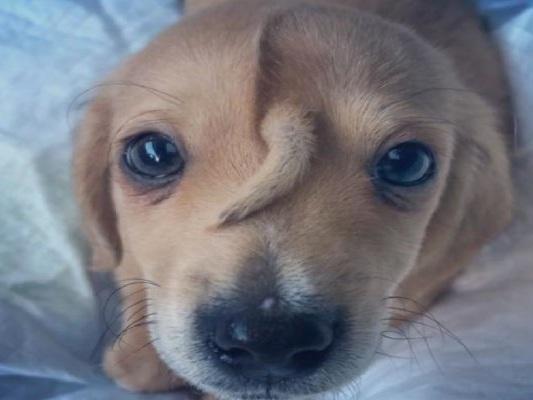 Narwhal, il cucciolo magico