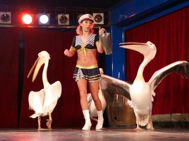"""Civitanova, arriva il circo e scoppia la polemica: """"Basta far soffrire gli animali"""""""