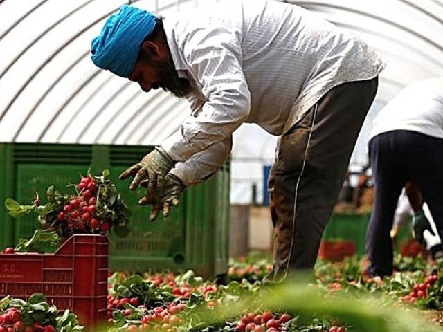 Caporalato in agricoltura, un problema europeo