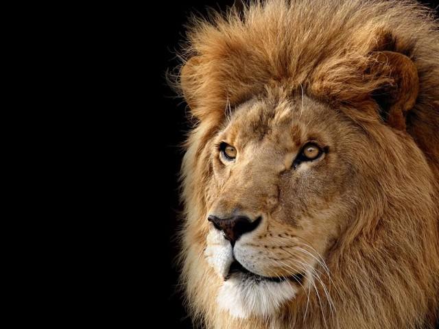 Oroscopo di domani 16 gennaio con classifica: passione al massimo per i leoncini