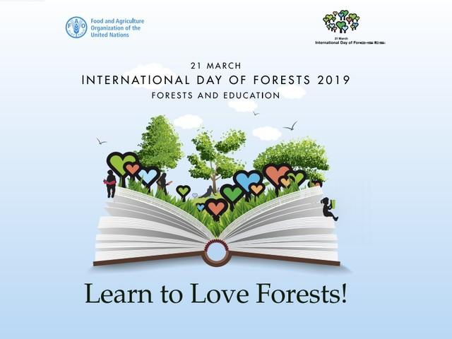Giornata internazionale delle foreste, Fao: educazione forestale per garantire il futuro (VIDEO)