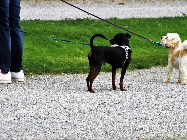Regole e coccole, così il cane sceglie il proprio padrone