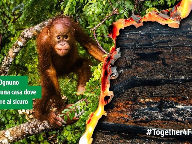 Europarlamento: necessarie misure vincolanti per fermare la deforestazione globale guidata dall'Ue