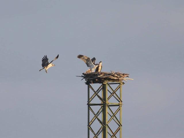 Piombino, il Wwf chiede di ampliare la riserva naturale Orti-Bottagone
